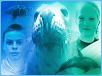 Montage of seal's face, dolphin, sea turtle and children