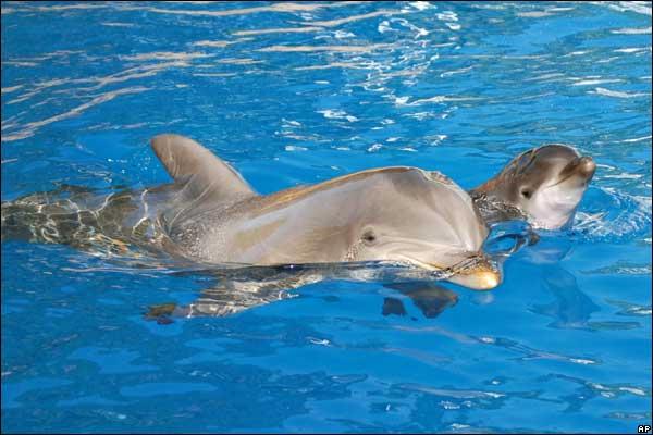 Самки дельфинов умеют готовить.