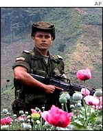 Colombian anti-narcotics police officer in a poppy field