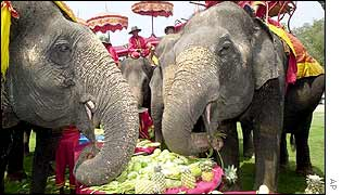 Thai elephants eat tropical fruits during the feast to mark the Elephant Day