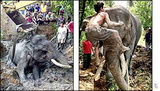A crane is used to pull out the elephant; keeper consoles the elephant once it is freed.