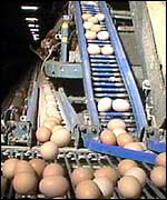 Eggs in battery farm