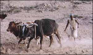 A farmer with his herd