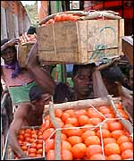 Tomatoes being loaded onto a lorry