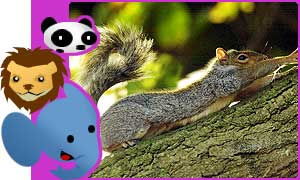 Squirrel quiz