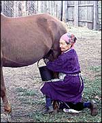 Horse milking in Kazakhstan, photo courtesy of the University of Exeter