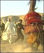 The Amir takes his horses out onto the plains surrounding Herat once a week