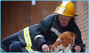 Angus the cat with firefighter Pete Dowling