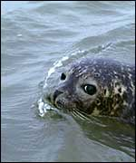 Healthy seal   Science