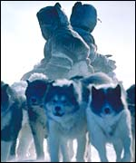 Inuit dog-team