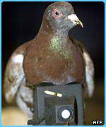 A pigeon was used during WW1 to take photos of the battlefields