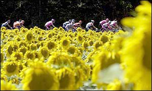 The peloton ride through the a field of sunflowers