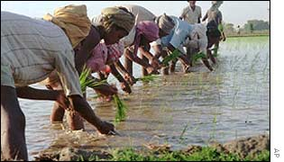 Farmers sowing in India