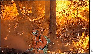 A firefighter tackles the fire in the Sequoia National Forest