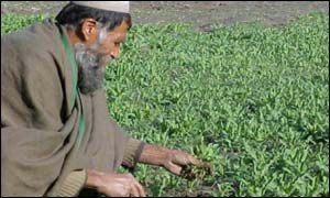 Afghan opium farmer