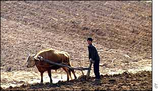 Young farmer ploughing a field