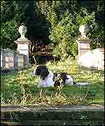 Dog in the overgrown garden
