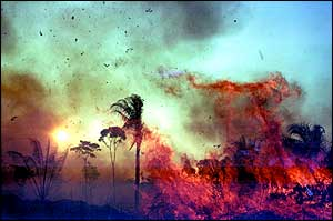 Trees in flames   M Friedlander/Unep/Topham