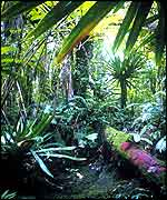 Tropical forest vegetation   M Schneider/Unep/Topham