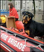 Dog in rescue boat