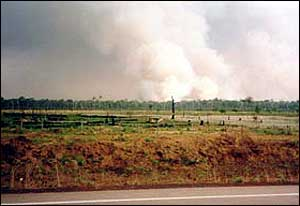 Fires in forest beyond road   Hugh Eva