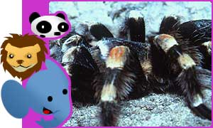 There are more than 50,000 different types of spider in the world