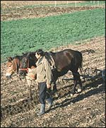 A Romanian farmer with horse and plough