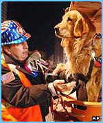 Pet therapy at Ground Zero