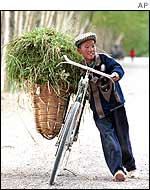 A boy wheeling his bicycle laden with animal feed
