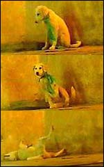 Stills showing a dog from an unidentified vapour in