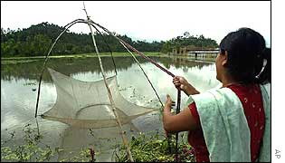 Indian woman trying to fish in the floodwaters in Imphal