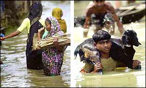 (Left) Bangladeshi women gather firewood, while (right) a boy carries a goat to safety