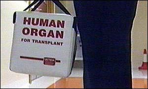 Organ being carried in a transplant bag