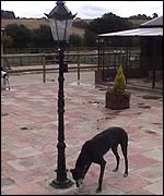 Sniffing out a lampost