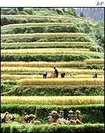 Terraced rice paddies in Guangxi