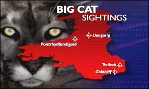 Big cat sightings Wales map