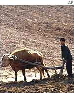 Farming in North Korean