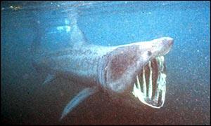 Los 10 animales más extraños y monstruos descubiertos