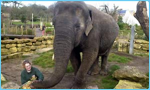 CBBC Newsround | ANIMALS | Wendy the old elephant dies
