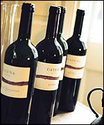Catena wine