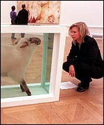 A viewer examines Hirst's sheep exhibit