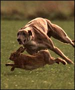 Hare tries to elude dog   PA