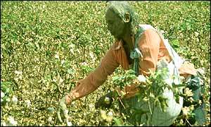 Cotton picker
