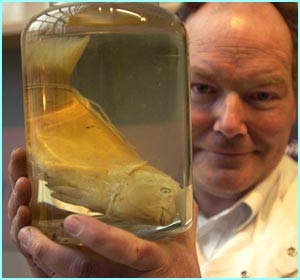 This parrot fish was collected by Darwin himself and  helped him formulate his theory of evolution