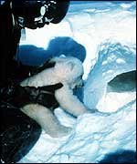 Man with bear cub by ice hole   NOAA