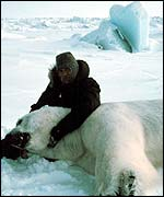 Man on ice with recumbent bear   NOAA