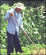 Thai farm worker
