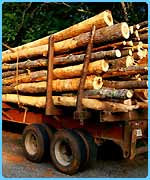 Illegal logging is taking its toll