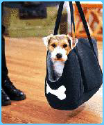 Dog in special carrier from Harrods