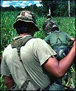 Soldiers patrol crop plantations, looking for coca